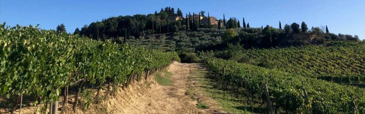 Vineyard in Italy pictured in foreground with villa in background atop hillside