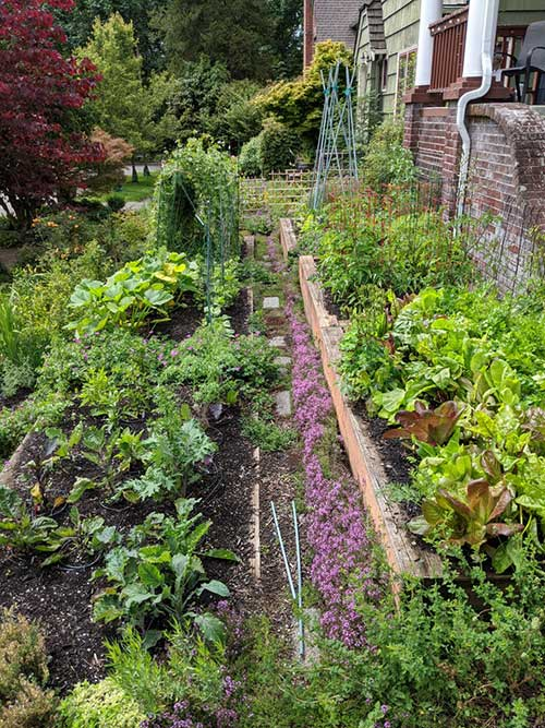 Photo of tiered garden of vegetables and herbs.