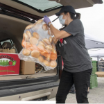Volunteer packing food donation in car